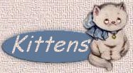 visit our kittens